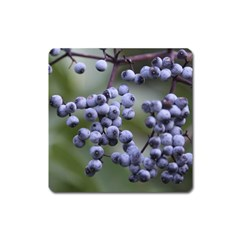 Blueberries 2 Square Magnet by trendistuff