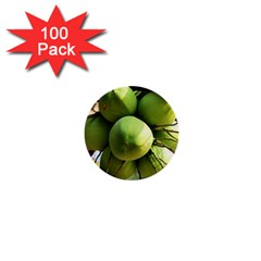 Coconuts 1 1  Mini Buttons (100 Pack)  by trendistuff