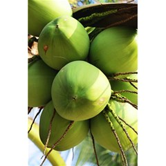 Coconuts 1 5 5  X 8 5  Notebooks by trendistuff