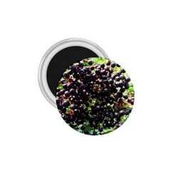 Elderberries 1 75  Magnets by trendistuff