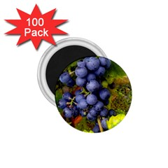 Grapes 1 1 75  Magnets (100 Pack)  by trendistuff