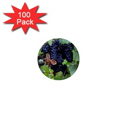 Grapes 3 1  Mini Magnets (100 Pack)  by trendistuff