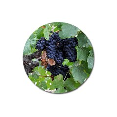 Grapes 3 Magnet 3  (round) by trendistuff