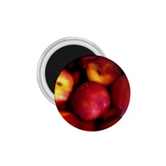 Nectarines 1 75  Magnets by trendistuff