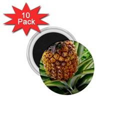 Pineapple 2 1 75  Magnets (10 Pack)  by trendistuff
