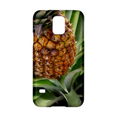 Pineapple 2 Samsung Galaxy S5 Hardshell Case  by trendistuff