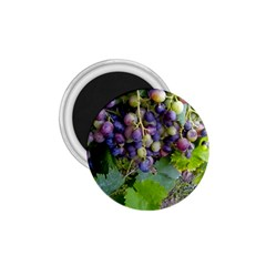 Grapes 2 1 75  Magnets by trendistuff