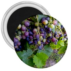 Grapes 2 3  Magnets by trendistuff