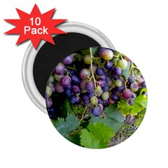 Grapes 2 2 25  Magnets (10 Pack)  by trendistuff