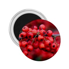 Red Berries 1 2 25  Magnets by trendistuff