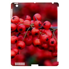 Red Berries 1 Apple Ipad 3/4 Hardshell Case (compatible With Smart Cover) by trendistuff