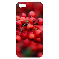 Red Berries 1 Apple Iphone 5 Hardshell Case by trendistuff
