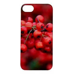 Red Berries 1 Apple Iphone 5s/ Se Hardshell Case by trendistuff