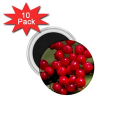 Red Berries 2 1 75  Magnets (10 Pack)  by trendistuff