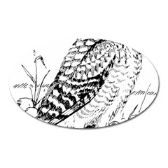 Animal Bird Forest Nature Owl Oval Magnet by Nexatart