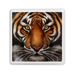 The Tiger Face Memory Card Reader (square)  by Nexatart