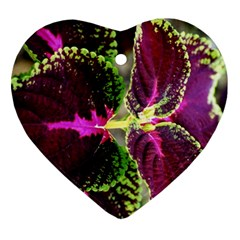Plant Purple Green Leaves Garden Heart Ornament (two Sides) by Nexatart