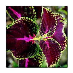 Plant Purple Green Leaves Garden Face Towel by Nexatart
