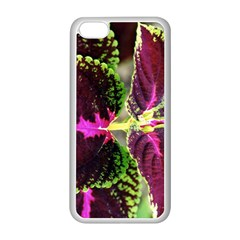 Plant Purple Green Leaves Garden Apple Iphone 5c Seamless Case (white)