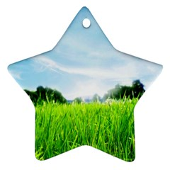 Green Landscape, Green Grass Close Up Blue Sky And White Clouds Star Ornament (two Sides)