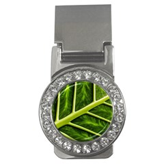 Leaf Dark Green Money Clips (cz)  by Sapixe