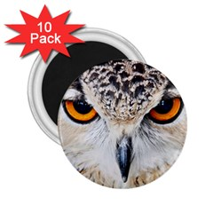 Owl Face 2 25  Magnets (10 Pack)  by Sapixe