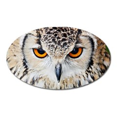 Owl Face Oval Magnet