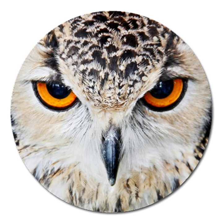 Owl Face Magnet 5  (Round)