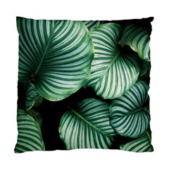 Tropical Florals Standard Cushion Case (two Sides) by goljakoff