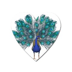 Peacock Bird Peacock Feathers Heart Magnet by Sapixe