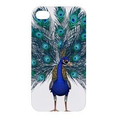 Peacock Bird Peacock Feathers Apple Iphone 4/4s Hardshell Case