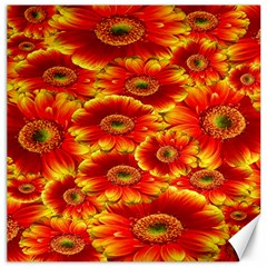 Gerbera Flowers Nature Plant Canvas 12  X 12