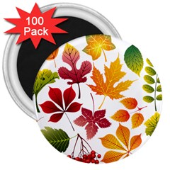 Beautiful Autumn Leaves Vector 3  Magnets (100 Pack)