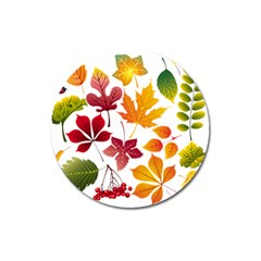 Beautiful Autumn Leaves Vector Magnet 3  (round)