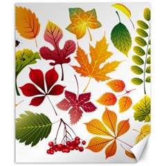 Beautiful Autumn Leaves Vector Canvas 20  X 24   by Nexatart