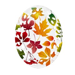 Beautiful Autumn Leaves Vector Oval Filigree Ornament (two Sides) by Nexatart