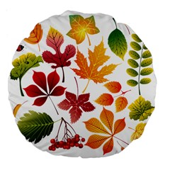 Beautiful Autumn Leaves Vector Large 18  Premium Flano Round Cushions by Nexatart