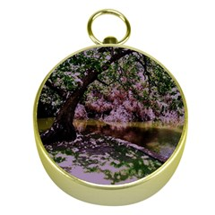 Old Tree 6 Gold Compasses by bestdesignintheworld