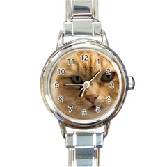 Animal Pet Cute Close Up View Round Italian Charm Watch by goodart