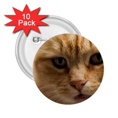 Animal Pet Cute Close Up View 2 25  Buttons (10 Pack)  by goodart