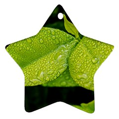Leaf Green Foliage Green Leaves Star Ornament (two Sides) by Simbadda