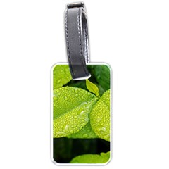 Leaf Green Foliage Green Leaves Luggage Tags (one Side)  by Simbadda