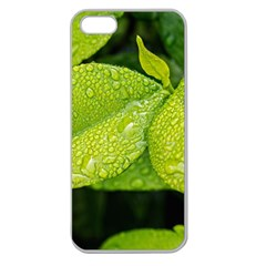 Leaf Green Foliage Green Leaves Apple Seamless Iphone 5 Case (clear)