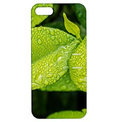Leaf Green Foliage Green Leaves Apple Iphone 5 Hardshell Case With Stand by Simbadda