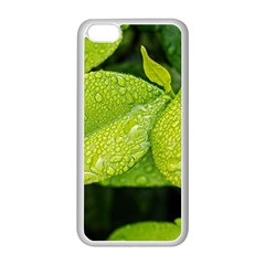 Leaf Green Foliage Green Leaves Apple Iphone 5c Seamless Case (white) by Simbadda