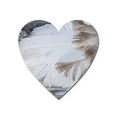 Feather Brown Gray White Natural Photography Elegant Heart Magnet by yoursparklingshop