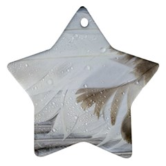 Feather Brown Gray White Natural Photography Elegant Star Ornament (two Sides) by yoursparklingshop