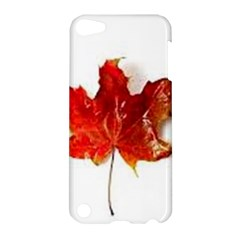 Innovative Apple Ipod Touch 5 Hardshell Case by GlobidaDesigns