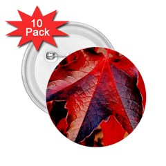 Wine Partner Wild Vine Leaves Plant 2 25  Buttons (10 Pack)