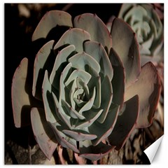 Succulent Green Pink Rosettes Canvas 20  X 20   by Sapixe